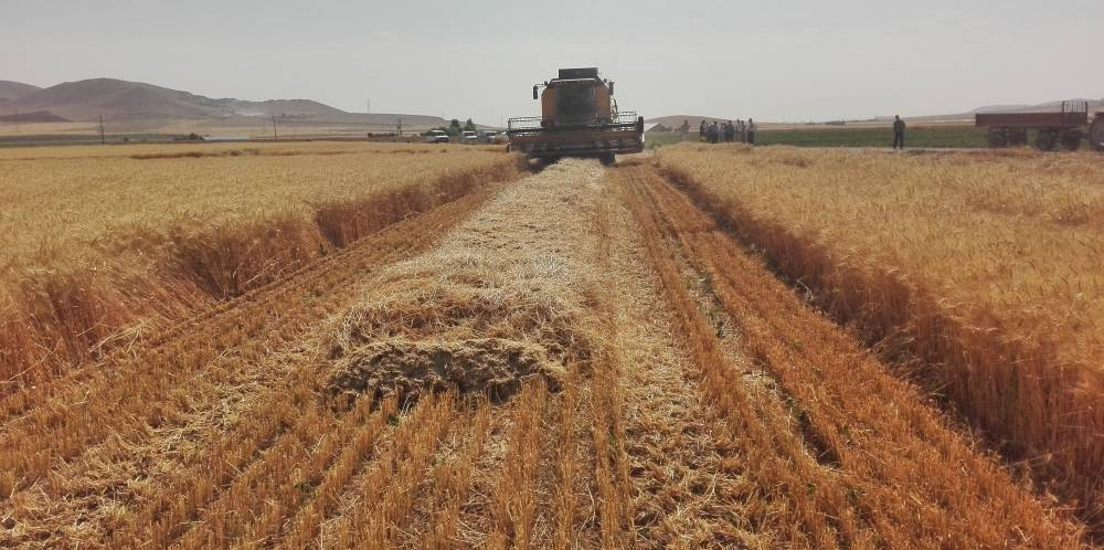 Application of biological fertilizers for improvement of irrigated wheat yield in Kurdistan province (west of Iran)