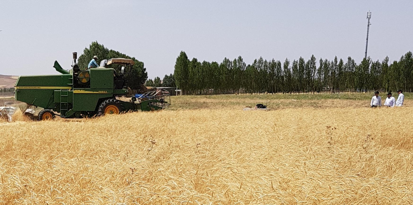Application of biological fertilizers for Improvement of rain-fed wheat yield in East Azerbaijan Province (Northwest of Iran)